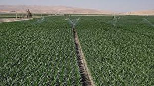 Iran to deploy mapping system to monitor key crop cultivation area